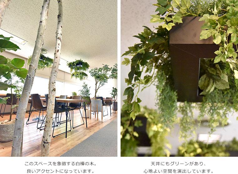 このスペースを象徴する白樺の木。良いアクセントになっています。天井にもグリーンがあり、心地よい空間を演出しています。